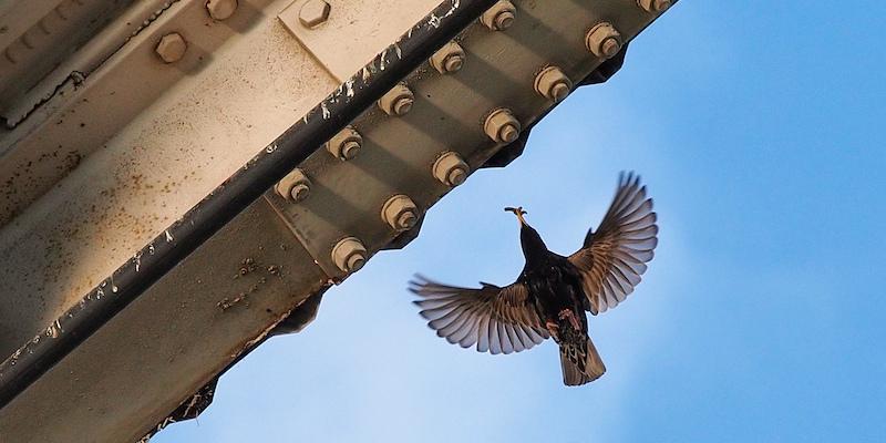 dein haus ist mein haus vogelschutz im geb udebau vogel natur. Black Bedroom Furniture Sets. Home Design Ideas