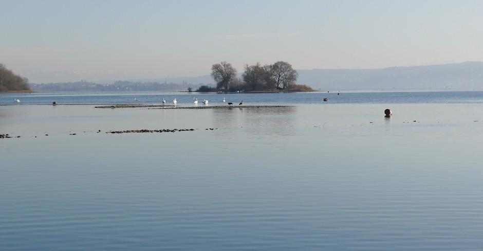 Die Radolfzeller Aachmündung – Vogeltreff am Bodensee