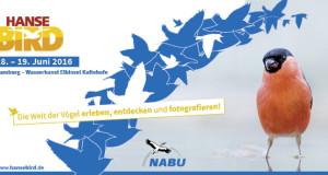 Das Vogelfestival des Nordens – Auf zur HanseBird 2016!