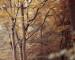 Spechte und uralte Bäume – Der Spessart
