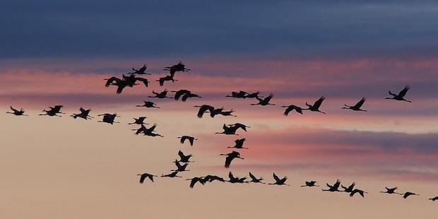 Zeichen des Himmels – Unterscheidung von Zugvögeln
