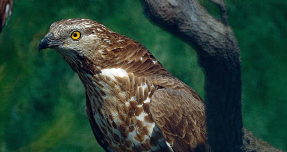 40 Jahre Schutz: Komitee gegen den Vogelmord