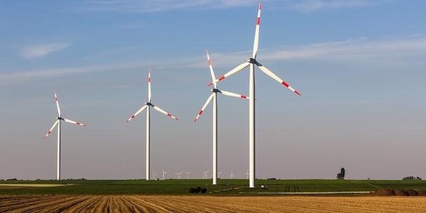 Heimische Vögel – Opfer der Windkraft