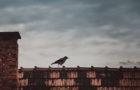 Vogel in Not: Unterschätzte Gefahren für Vögel