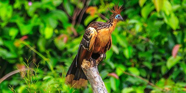 Juwelen des Regenwalds: Die Vogelwelt Boliviens