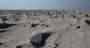 Der Norderoogsand: Eine Sandbank wird zur Insel