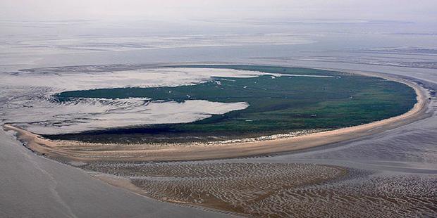 Die Vogelinsel Trischen in Schleswig-Holstein