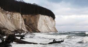Winterliche Beobachtungen: Wasservögel auf Rügen