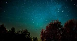 Vögel der Nacht – geheimnisvoller Biorhythmus