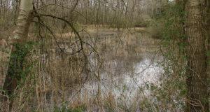 Die Ahlhorner Fischteiche – Voglbeobachtung im Zauberwald