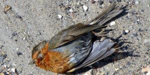 Illegale Vogeljagd –<br/> Das unaufhaltsame Verbrechen?