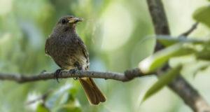 Insektenschwund – Gefahr für die Vogelwelt