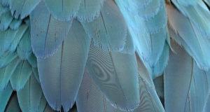 Das Vogelgefieder – Vielseitiges Naturwunder