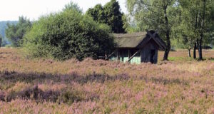 Vogelbeobachtung in der Lüneburger Heide