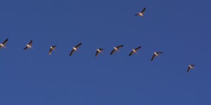 Wie Vögel in großer Höhe überleben