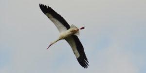 Klimawandel und Zugvögel