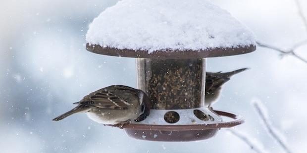Das perfekte Vogel-Dinner –<br/> Tipps für die Winterfütterung