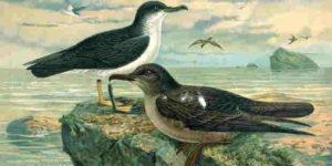 Johann Friedrich Naumann und die Deutsche Ornithologen-Gesellschaft