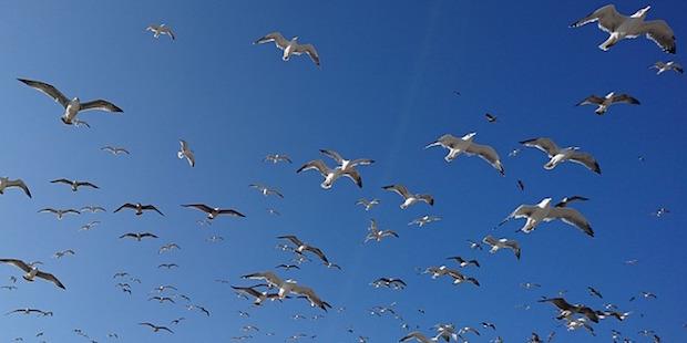 Vogelbeobachtung in Portugal: Die Sagres-Halbinsel