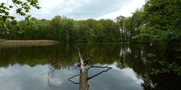 Vogelbeobachtung in Sachsen: Die Limbacher Teiche