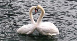 Für immer oder doch auf Zeit: <br/> Liebe und Treue bei Vögeln