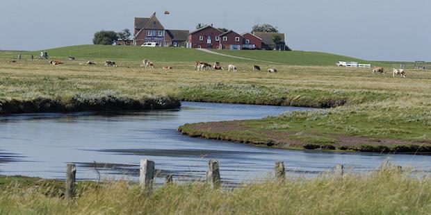 Die Hallig Hooge im Schleswig-Holsteinischen Wattenmeer