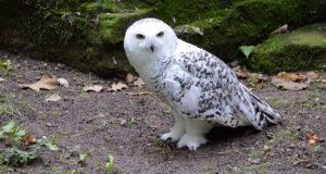 Aktualisierte Rote Liste – Immer mehr Vögel in Gefahr