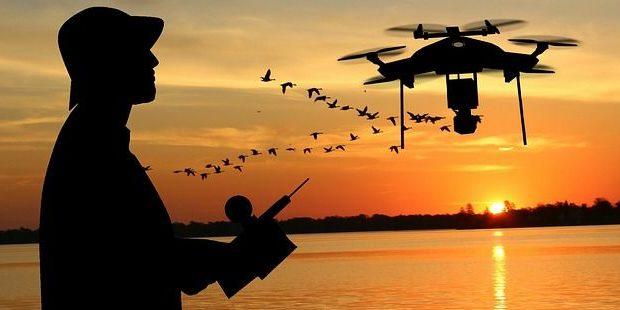 Konkurrenz im Luftraum: Drohnen vs. Vögel