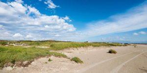 Dänisches Inselparadies: Vogelbeobachtung auf Fanø