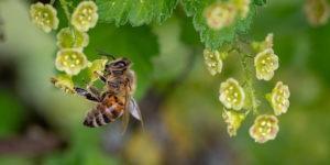 Insektensterben in Deutschland – Dramatischer als gedacht?