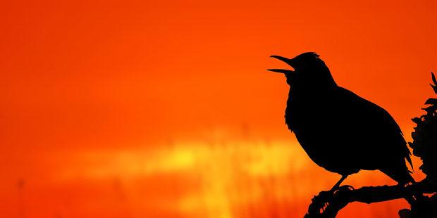 Vögel und Lärm: Wenn die Stadt übertönt werden muss