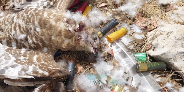 Gefährliche Reiseroute: Zugvogeljagd im Libanon