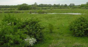 Der Drömling: <br/> Vogelparadies zwischen Sachsen-Anhalt und Niedersachsen