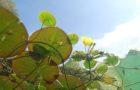 """""""Jeder Gemeinde ihr Biotop"""" – Ein Naturprojekt für die Zukunft"""