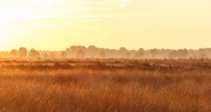 Ein kostbares Überbleibsel –<br/> Das Recker Moor in Nordrhein-Westfalen
