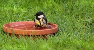 Alles außer schwitzen: Vögel und Hitze