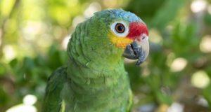 Wenn Papageien kalkulieren: Verblüffende Forschungsergebnisse