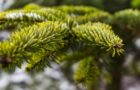 Weihnachtsbaumplantagen als Lebensraum