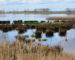 Der Anklamer Stadtbruch: Naturjuwel in Mecklenburg-Vorpommern