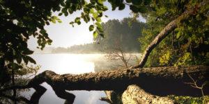 Seenparadies im Grenzgebiet: Die Schaalseeregion