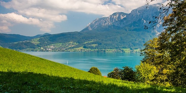 Alpine Vogelbeobachtung: Traun- und Attersee in Oberösterreich