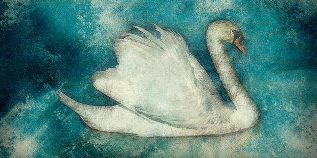 Von Raben, Gänsen und Schwänen: Vögel im Märchen