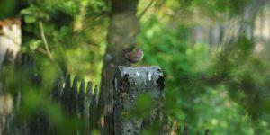 Lebensraum für Mensch und Vogel: Der Garten