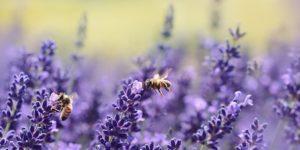 Die Bayern für die Bienen: Volksbegehren erfolgreich