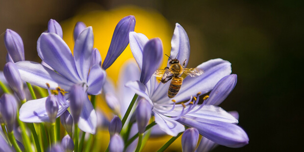 """Volksbegehren """"Rettet die Bienen"""" – Wie geht es weiter?"""