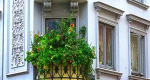 Ein insektenfreundlicher Balkon – So geht's!