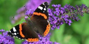 Durchzählen und Mithelfen: der Insektensommer 2019
