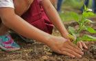 Gärtnern ohne Glyphosat – Warum ihr auf Pestizide verzichten könnt