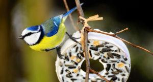 Vogelbeobachtung – Balsam für die Seele