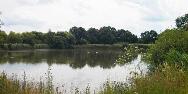 Sächsisches Vogelparadies: Die Eschefelder Teiche